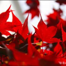 Color Inspiration: Red | EvinOK.com