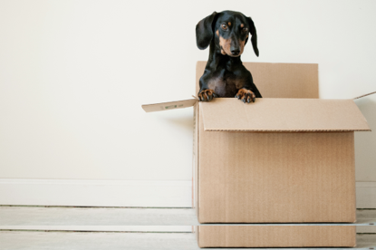 dog playing in empty box