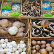 Mushroom Recipes | EvinOK